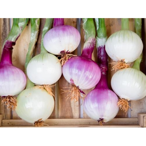 Da Lat Red Onion 500gr